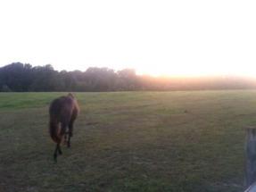 horse_in_a_field