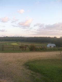 farm_field