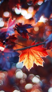 fall_wallpaper