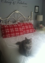 cats_on_beds