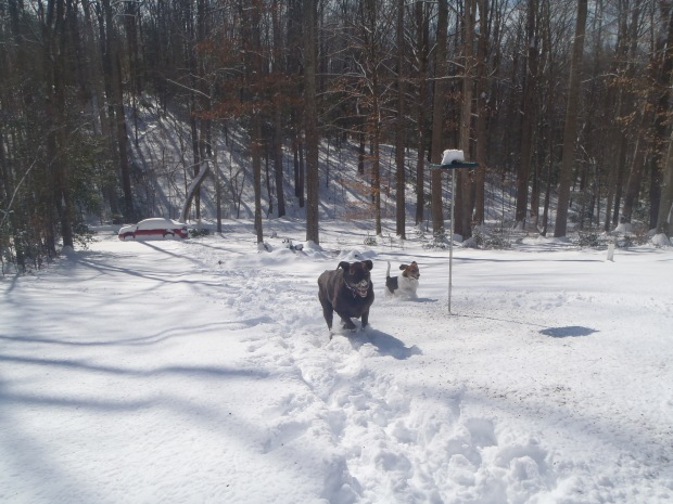 dogs_in_the_snow