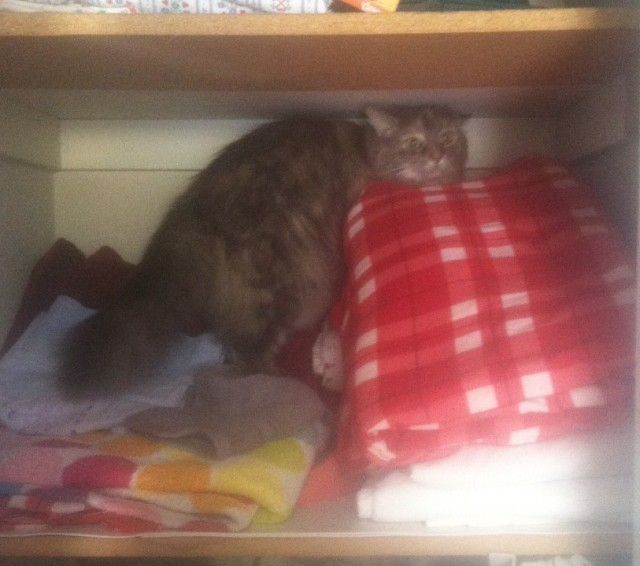 cats_in_closets