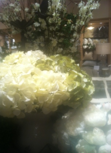 hydrangeas_in_bloom