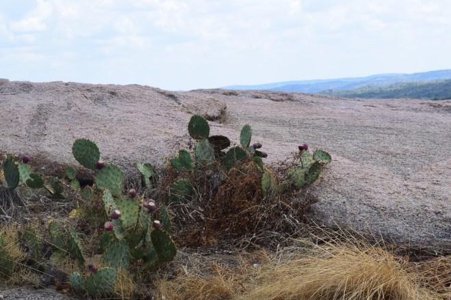 cactus in texas