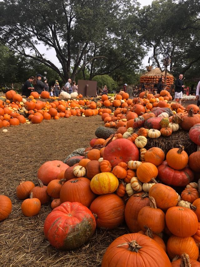 arboretum pumpkin village