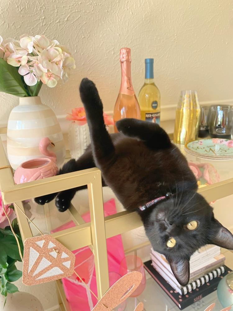 black cat on bar cart
